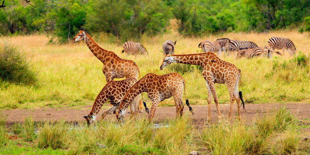 Top reasons to visit South Africa